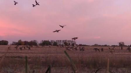 鸟儿本在自由自在的飞翔,下一秒让人震惊,网友:特殊磁场?