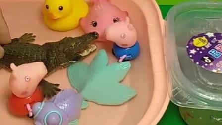 乔治佩奇去游泳,乔治说里面有小鳄鱼,自己不敢下去