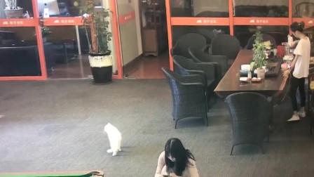 妹子人生中第一次被猫撞倒,看着录像看一次笑一次