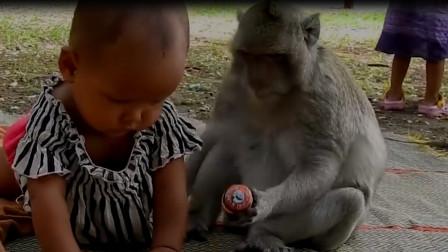 主人不在猴子帮忙照看孩子,不料下一秒意外出现,镜头拍下全程
