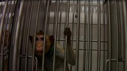 地狱实验室!德国的药理毒性实验室被曝虐待动物,随后卧底潜入