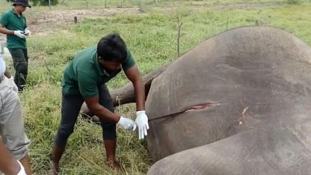 为什么说死后的大象不能碰?碰了会发生什么?原来是这样