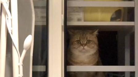 猫咪就这样一直盯着铲屎官,也不知道它在想什么
