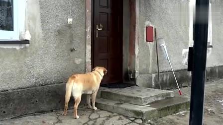 狗狗贪玩回家按门铃,主人惩罚它就是不开门