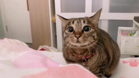 看来这是一只给钱就能随便摸的小猫咪!