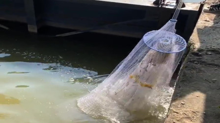 农村小姐姐来水闸口撒网捕鱼,这技术厉害了,姿势真漂亮!