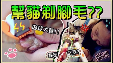 【鱼乾】猫逼一直暴冲滑倒,只好来剃脚毛啦!