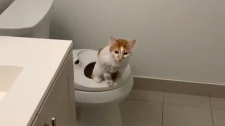 朋友家的猫,不仅会坐马桶还会自己冲水,厉害了