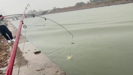 农村小伙在桥洞下钓到大鱼了,没想到这鱼竿质量这么好,直接就把大货提上岸!