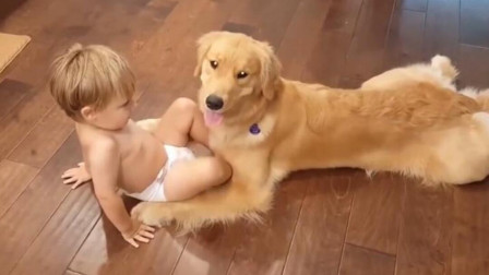 狗狗生气不理小宝宝,下一秒宝宝的举动,一旁的爸妈都笑喷了