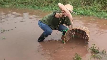 农村小伙打算去山里采药,结果发现水里有鱼,直接把背篓盖上去,厉害!