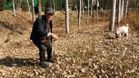 实拍农村放羊大爷,老人心态特别好,真是值得我们学习