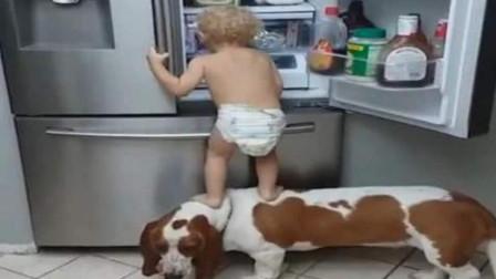 宝宝和狗狗配合偷东西吃,不料女主人突然回来了,下一秒憋住别笑