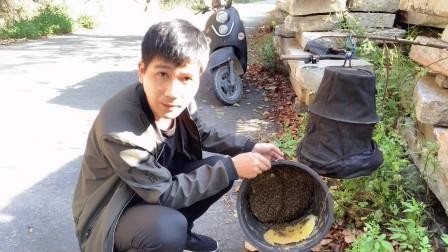 小伙在路边居然放了一个桶,不到2个月就有蜂了,路边收蜂好轻松