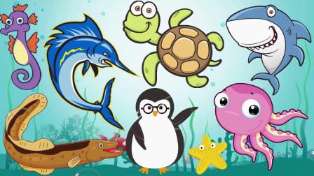 认识小乌龟等8种海洋动物,早教认识动物