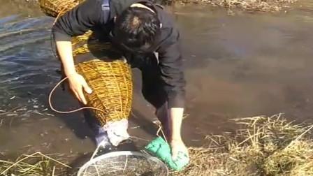 农村小伙穿着水衣来收网了,结果收获满满,午餐可以加菜了!