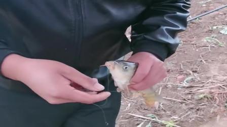 农村水库里的鲤鱼泛滥,大叔一上午就钓了十多条鲤鱼,无语了!