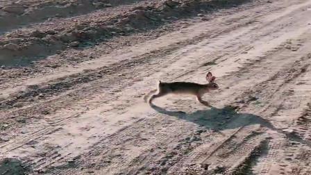 出门赶集遇到一只小兔子,一看就知道是迷路了,真可怜!