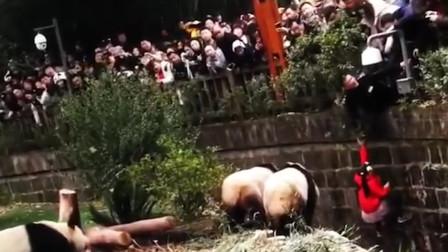 """小女孩掉进饲养池引熊猫""""围观"""" 群众惊慌尖叫"""