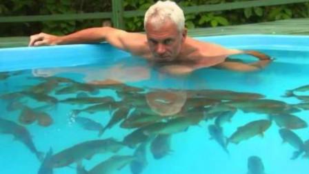 老人养了150条食人鱼,将它们饿了5天后,第6天亲自跳进泳池