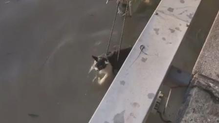 好心爷爷救了一只掉进江里的猫,太有爱了