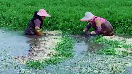 农村人挣钱不容易,大冬天直接泡在水里洗菜,太辛苦了!