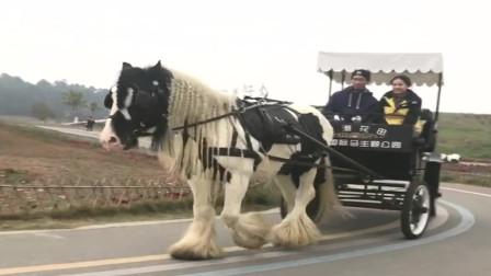 这是我见过最漂亮的马,这发型做一次应该得不少钱吧!
