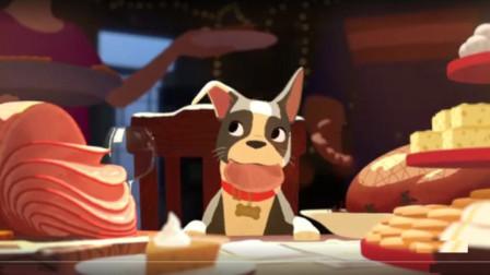 流浪狗被男子收留,从此享受人间美食,渐渐的只想吃荤不想吃素