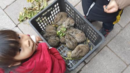 和爸爸妈妈回农村老家去赶集,镇上很热闹,看到一群可爱的兔子