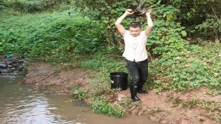 农村小伙发现河里有鱼,直接拿了个树桩和水桶砸了过去,太猛了!