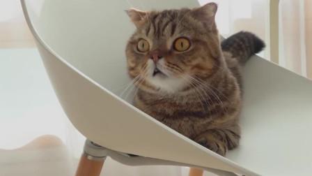 猫咪偷食,主人惩罚它不吃饭, 太可爱了