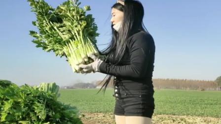 农村小媳妇真能干,今年种植的芹菜大丰收了,羡慕!