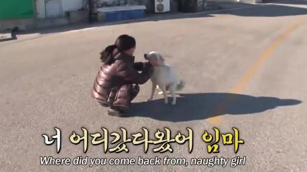 韩国阿姨的狗狗不回家,跟踪一天,原来是这样