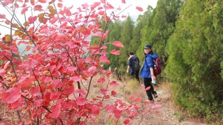紫若作品:红叶谷中看红叶19.11