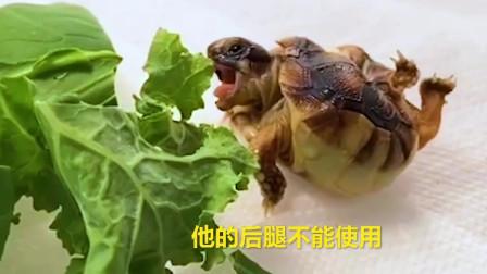 天生残疾的小乌龟,遇到好心小哥,有爱又有才