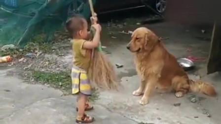 大金毛就是懂事,面对小主人的打闹丝毫不生气