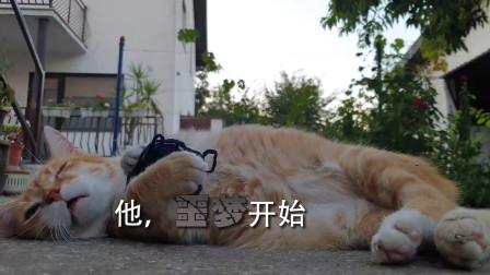猫咪版一起来看流星雨预告,看完是不是有点小期待?