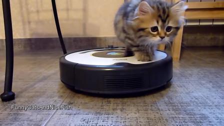 依我看,扫地机器人就是猫主子们从喵星球带下来的坐骑