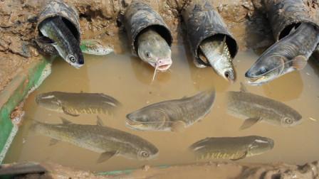这个捕鱼技术不错吧,用最简单的方式,轻松捕获大鱼!