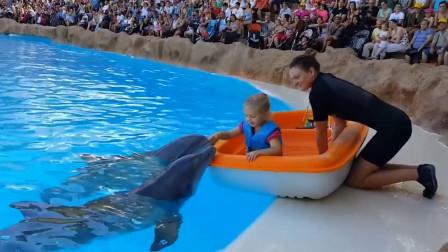 海豚先生到底有浪漫?不仅会亲吻小女孩,居然还会用鲜花