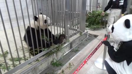 游客装扮成大熊猫去动物园,真熊猫看到后,接下来憋住别笑