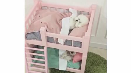 【可爱的小狗狗】-那些年,睡在我上铺的兄弟!
