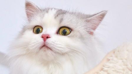 主人骗小猫咪墙上有虫子,猫咪傻站了半天发现上当了,生气的走掉