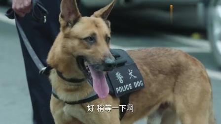 警犬:妈妈只顾讲电话,婴儿车急溜下滑坡,警犬目睹飞奔截停!