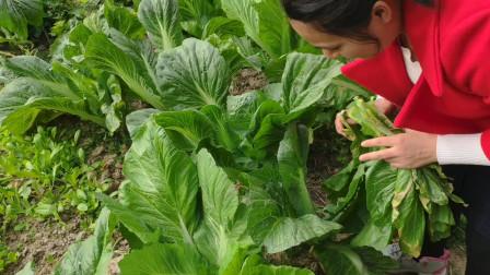 老家采摘绿色无公害蔬菜,收获颇丰!