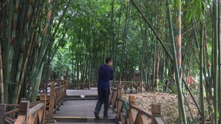 幽静斑竹林,休闲的好地方