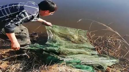 农村大哥在浑浊的水坑里下地笼,看看他这满满一大兜子的收获,太厉害了吧!