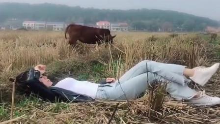 农村小媳妇这生活,躺在稻田放牛,好羡慕这种自由自在的生活!