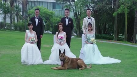 警犬:派出所中的3对新人结婚,警犬跳出来抢镜太可爱!