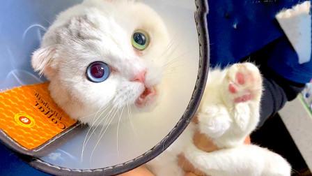 新年刚过猫咪就生病了,主人跨城300公里只为确诊,拿到结果的时候哭了